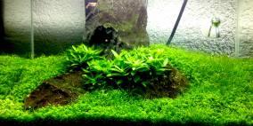 mein erstes Iwagumi - Flowgrow Aquascape/Aquarien-Datenbank
