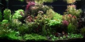 Mein Neuanfang - Flowgrow Aquascape/Aquarien-Datenbank