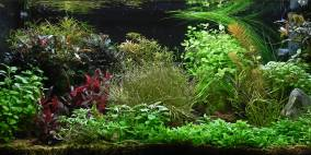 Meine 110L - Flowgrow Aquascape/Aquarien-Datenbank