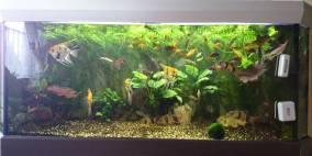 Meine 550L Badewanne - Flowgrow Aquascape/Aquarien-Datenbank