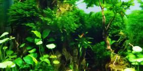 Mosquito Hill - Flowgrow Aquascape/Aquarien-Datenbank