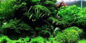 Moss rocks… - Flowgrow Aquascape/Aquarien-Datenbank