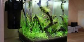MyStart - Flowgrow Aquascape/Aquarien-Datenbank