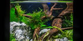 Mystic Kingdom - Flowgrow Aquascape/Aquarien-Datenbank
