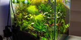 Nano 40l - Flowgrow Aquascape/Aquarien-Datenbank