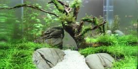Nano Becken - Flowgrow Aquascape/Aquarien-Datenbank