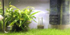Nansui - Flowgrow Aquascape/Aquarien-Datenbank