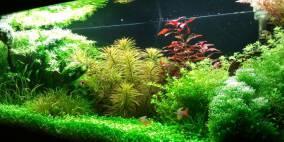 natural colors - Flowgrow Aquascape/Aquarien-Datenbank