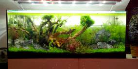 Nice little world - Flowgrow Aquascape/Aquarien-Datenbank