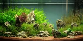 Nowhere Fast - Flowgrow Aquascape/Aquarien-Datenbank