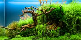 Old Life - Flowgrow Aquascape/Aquarien-Datenbank