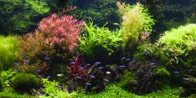 Olli Seins - Flowgrow Aquascape/Aquarien-Datenbank