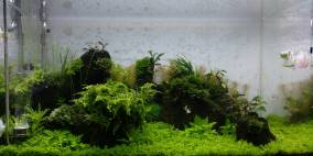 Once it was alive - Flowgrow Aquascape/Aquarien-Datenbank