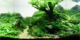 Once there was chaos - Flowgrow Aquascape/Aquarien-Datenbank