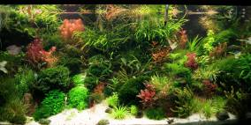 OneMoreTry - Flowgrow Aquascape/Aquarien-Datenbank