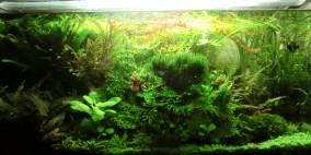 Orrik's AQ 80x40x40 2013 - Flowgrow Aquascape/Aquarien-Datenbank