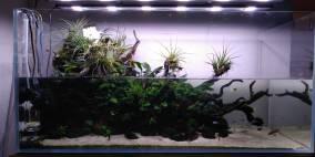 PALU - Flowgrow Aquascape/Aquarien-Datenbank