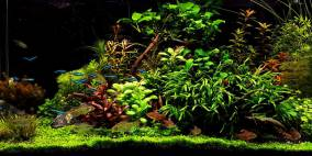 Pflanzenwelt - Flowgrow Aquascape/Aquarien-Datenbank