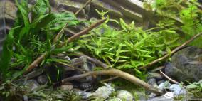 Piece of Nature - Flowgrow Aquascape/Aquarien-Datenbank