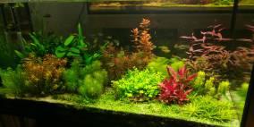 Plant's Paradise - Flowgrow Aquascape/Aquarien-Datenbank