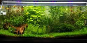 Proxima 325 - Flowgrow Aquascape/Aquarien-Datenbank