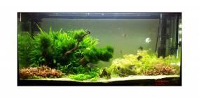 Pteropus' Island - Flowgrow Aquascape/Aquarien-Datenbank