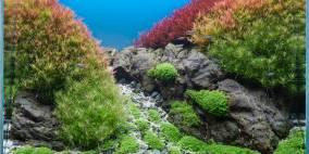 Rastafari - Flowgrow Aquascape/Aquarien-Datenbank
