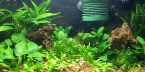 Ray C. 20ltr - Flowgrow Aquascape/Aquarien-Datenbank
