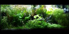 Rio verde - Flowgrow Aquascape/Aquarien-Datenbank