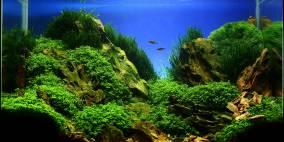 Rocks - Flowgrow Aquascape/Aquarien-Datenbank