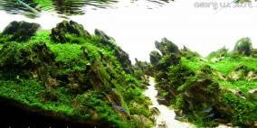 Rupture - Flowgrow Aquascape/Aquarien-Datenbank