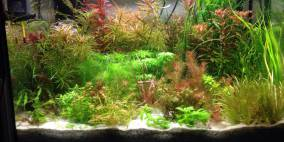 Sammelsurium - Flowgrow Aquascape/Aquarien-Datenbank