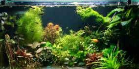 Sansibar of Asia - Flowgrow Aquascape/Aquarien-Datenbank