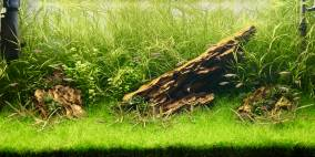 Sanzon Iwagumi - Flowgrow Aquascape/Aquarien-Datenbank