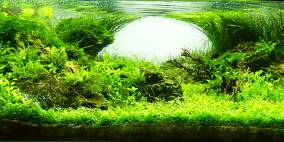 Scarface - Flowgrow Aquascape/Aquarien-Datenbank