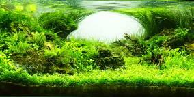 Scarface - Flowgrow Aquascape/Aquarien-Datenbank