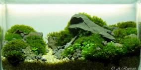 Schrumpfmoment - Flowgrow Aquascape/Aquarien-Datenbank