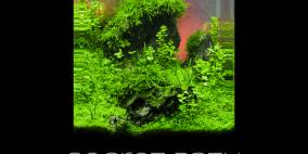 Secret Path - Flowgrow Aquascape/Aquarien-Datenbank