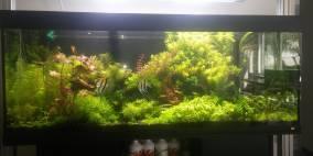 Segelpfütze - Flowgrow Aquascape/Aquarien-Datenbank