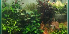 Shirabe - Flowgrow Aquascape/Aquarien-Datenbank
