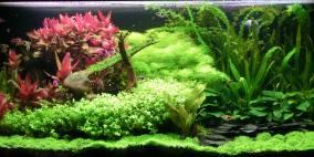 Silmarillion - Flowgrow Aquascape/Aquarien-Datenbank