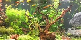 Small fish in a big pool - Flowgrow Aquascape/Aquarien-Datenbank