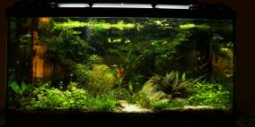 somewhere in a mossy grove - Flowgrow Aquascape/Aquarien-Datenbank