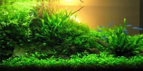 Sonnenuntergang - Flowgrow Aquascape/Aquarien-Datenbank