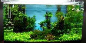 Square 80 - Flowgrow Aquascape/Aquarien-Datenbank