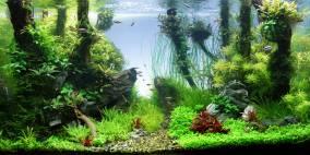 Sticks'n Stones - Flowgrow Aquascape/Aquarien-Datenbank