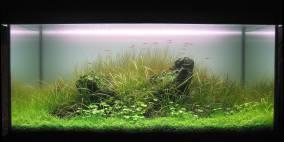 Stone Garden - Flowgrow Aquascape/Aquarien-Datenbank