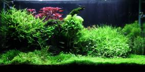 Stones and Wood - Flowgrow Aquascape/Aquarien-Datenbank