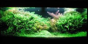 Sunny Day - Flowgrow Aquascape/Aquarien-Datenbank