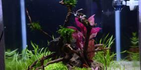 Superfish 25 - Flowgrow Aquascape/Aquarien-Datenbank